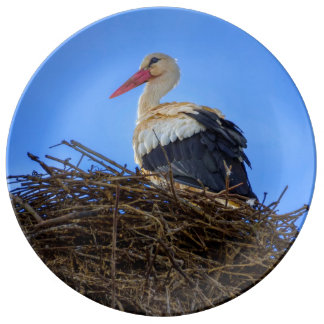 European white stork, ciconia, in the nest plate