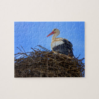 European white stork, ciconia, in the nest puzzles