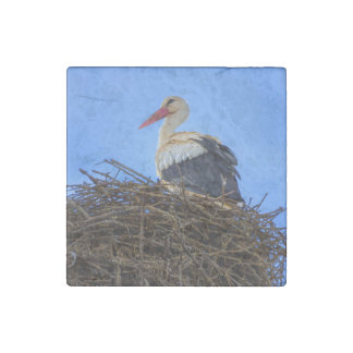 European white stork, ciconia, in the nest stone magnets
