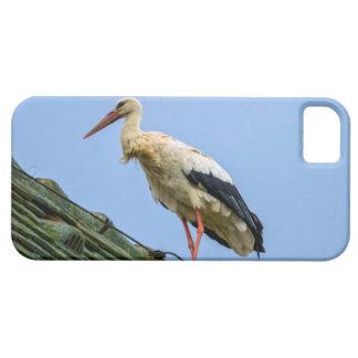 European white stork, ciconia iPhone 5 cover
