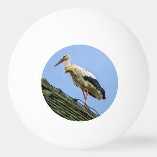 European white stork, ciconia ping pong ball