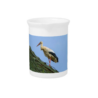 European white stork, ciconia pitcher