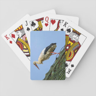 European white stork, ciconia playing cards