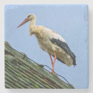 European white stork, ciconia stone coaster