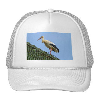 European white stork, ciconia trucker hat