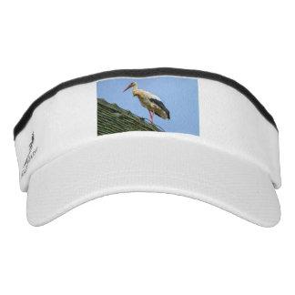 European white stork, ciconia visor