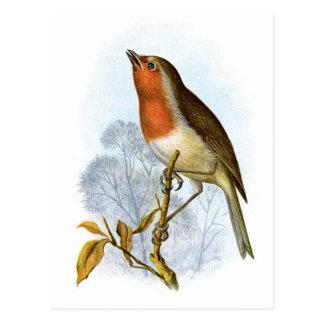 Européen Robin - rubecula d'Erithacus Cartes Postales