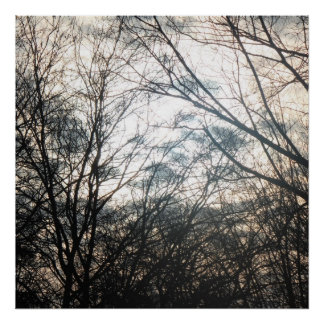 Evening dusk trees poster