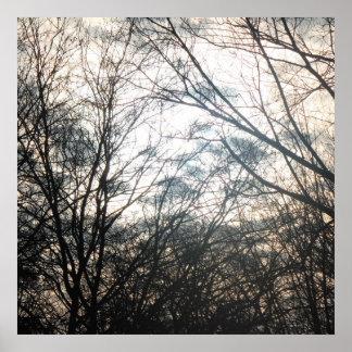 Evening dusk trees poster