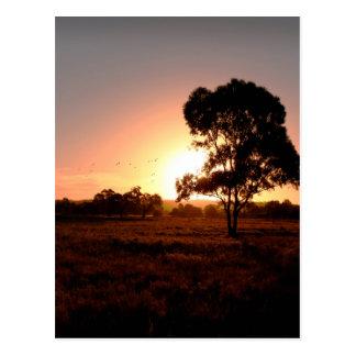 Evening Gold Postcard