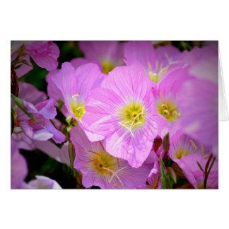 Evening Primrose Card