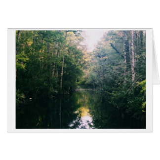 Everglades Green Blank Photo Card