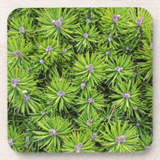 Evergreen branches drink coaster