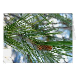 Evergreen Christmas Card
