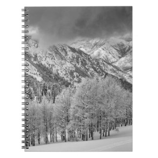 Evergreens and Aspen trees in a snow storm Spiral Note Book