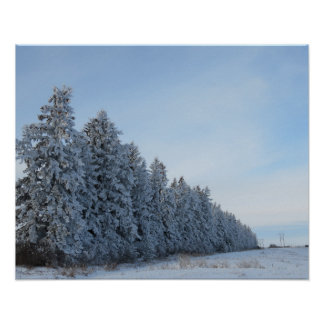 evergreens in winter art photo poster
