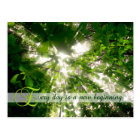 Every Day is a New Beginning Sunlight Trees Forest Postcard