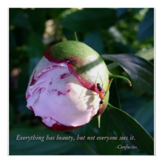 Everything Has Beauty Confucius quote With Flower Poster