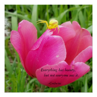 Everything Has Beauty Confucius Spider on Tulip Perfect Poster