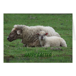 Ewe With Lamb, Easter Greeting Card