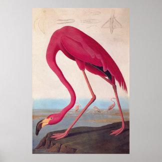 Ex-libris rose américain de cru d'Audubon de