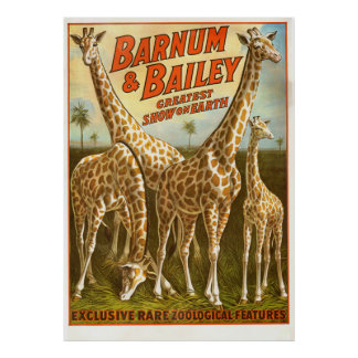 Exclusive Rare Zoological Feature, Giraffe Poster