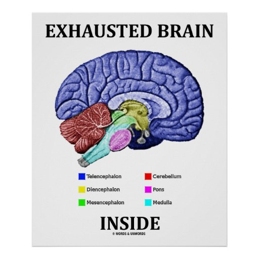 Exhausted Brain Inside (Anatomical Brain Humor) Poster