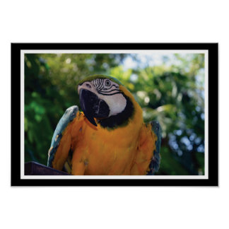 Exotic Animals - Macaw Parrot Poster