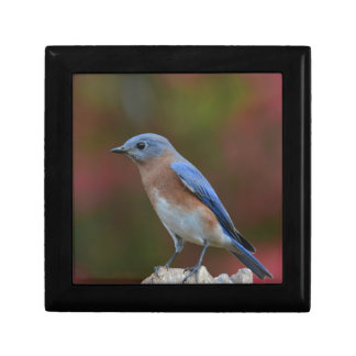 Exotic Bluebird Gift Box