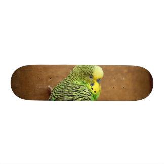 Exotic Budgie Bird Skate Board Deck