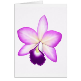 Exotic Cattleya Orchid Flower Greeting Card