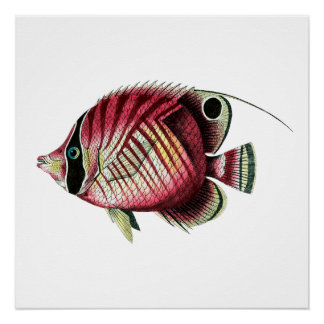 Exotic colorful fish poster
