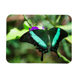 Exotic Emerald  Swallowtail Magnet
