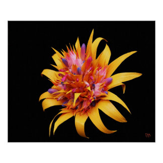 Exotic Floral Prints