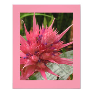 Exotic Flower Print