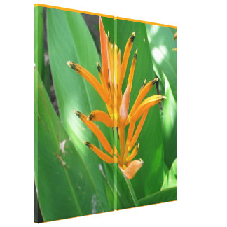 Exotic Heliconia Flower Canvas Print