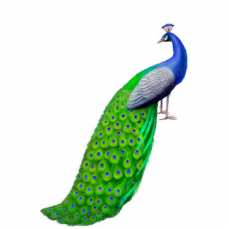 Exotic Indian Blue Peacock Pin Standing Photo Sculpture