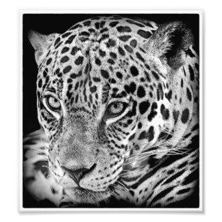Exotic jaguar photo