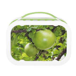 Exotic Maja fruits Lunchbox