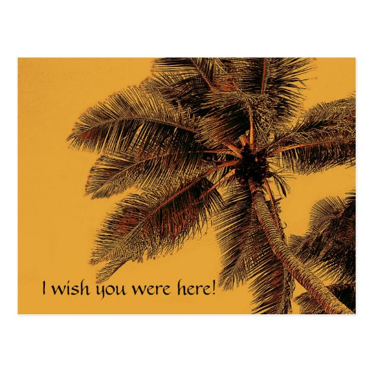 exotic palm postcard