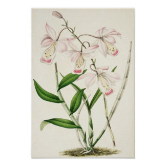 Exotic Pink & White Orchids Poster