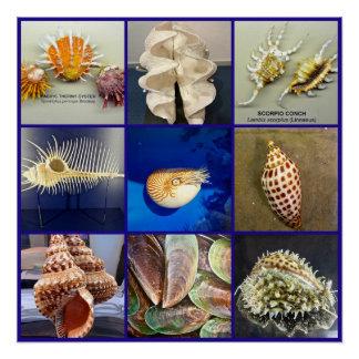 Exotic SeaShell Photography Sanibel Island Florida Perfect Poster