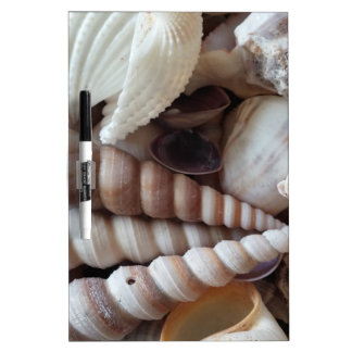 Exotic Seashells Collection, Summer Beach Dry Erase Boards