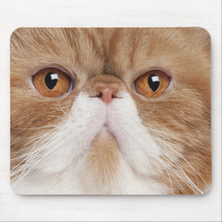 Exotic Shorthair (2,5 years old) Mouse Pad
