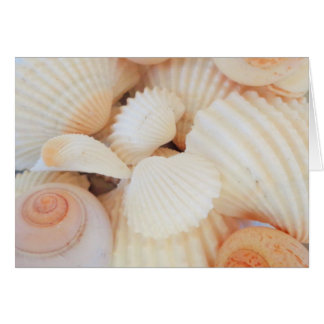 Exotic White Peach Sea Shells, Summer Beach Card