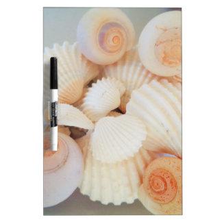 Exotic White Peach Sea Shells, Summer Beach Dry-Erase Whiteboards