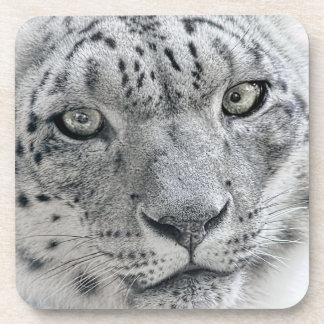 Exotic White Snow Leopard Drink Coasters