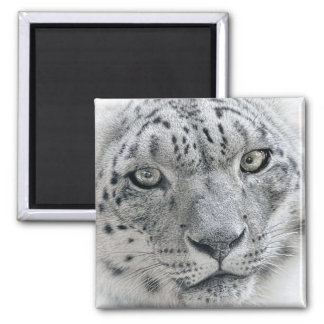 Exotic White Snow Leopard Refrigerator Magnet