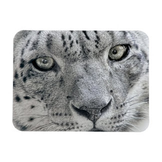 Exotic White Snow Leopard Magnets