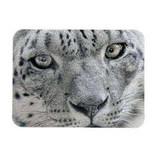 Exotic White Snow Leopard Rectangular Photo Magnet